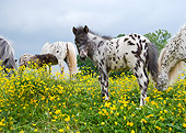HOR 03 MB0002 01