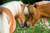 HOR 03 MB0003 01