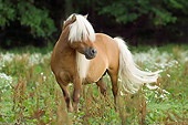 HOR 03 MB0004 01