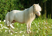 HOR 03 MB0006 01