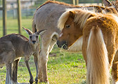HOR 03 MB0009 01