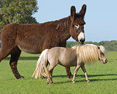 HOR 03 MB0014 01