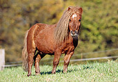 HOR 03 SS0014 01