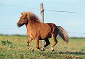 HOR 03 SS0015 01