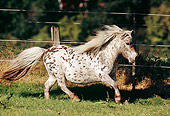 HOR 03 SS0016 01