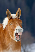 HOR 04 KH0009 01