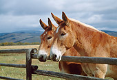 HOR 04 KH0011 01
