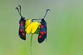 INS 01 AC0024 01