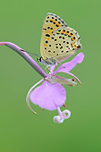 INS 01 AC0034 01