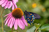 INS 01 DA0008 01
