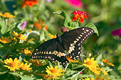 INS 01 DA0011 01