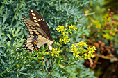 INS 01 DA0013 01