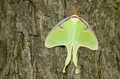 INS 01 DA0030 01