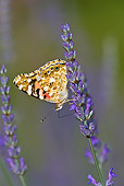 INS 01 KH0002 01