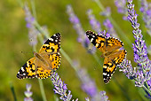 INS 01 KH0004 01