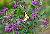 INS 01 LS0009 01