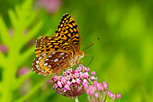INS 01 LS0011 01