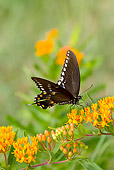 INS 01 LS0014 01