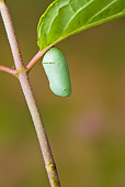 INS 01 TK0017 01