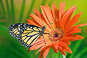 INS 01 TK0026 01