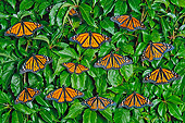 INS 01 TK0030 01