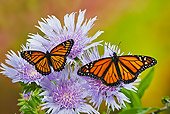INS 01 TK0035 01