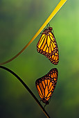 INS 01 TK0036 01