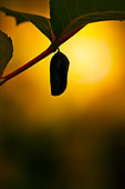 INS 01 TK0039 01