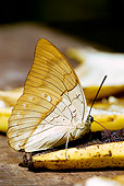 INS 01 WF0007 01