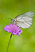 INS 01 WF0011 01