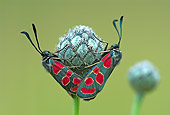 INS 01 WF0019 01