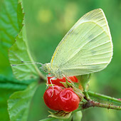 INS 01 WF0021 01