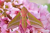 INS 01 WF0023 01