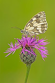 INS 01 WF0026 01
