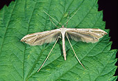 INS 01 WF0028 01