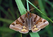INS 01 WF0029 01