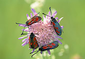INS 01 WF0033 01