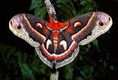 INS 01 LS0001 01