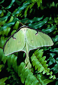 INS 01 LS0004 01