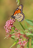 INS 01 LS0006 01