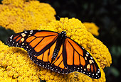 INS 01 RD0044 01