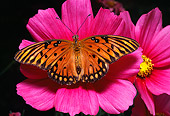 INS 01 RD0050 01