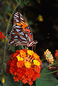 INS 01 RD0051 01