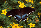 INS 01 RD0052 01