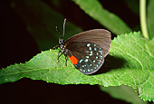 INS 01 RD0067 01