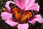 INS 01 RD0069 01