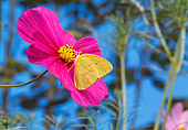 INS 01 RD0073 01