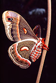 INS 01 RD0076 01