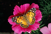 INS 01 RD0078 01