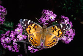 INS 01 RD0079 01